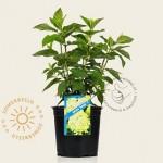 plantje1